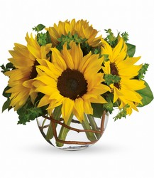 Sunny Sunflowers from Faught's Flowers & Gifts, florist in Jonesboro