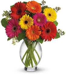 Gerbera Brights from Faught's Flowers & Gifts, florist in Jonesboro