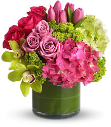 New Sensations from Faught's Flowers & Gifts, florist in Jonesboro